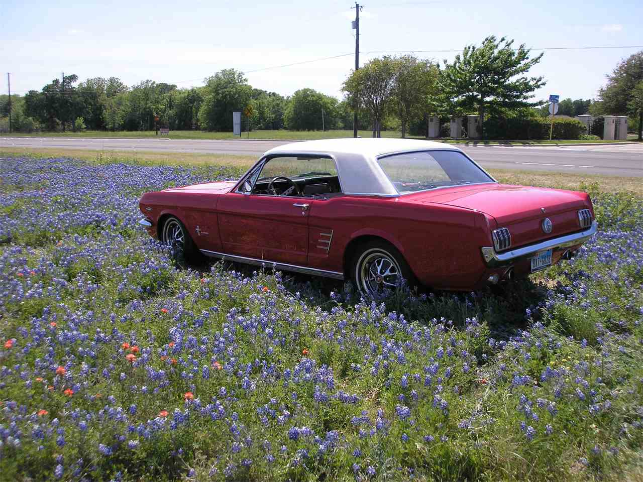 Large Picture of '66 Mustang - LTB7