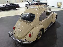 Picture of '66 Beetle - MACA