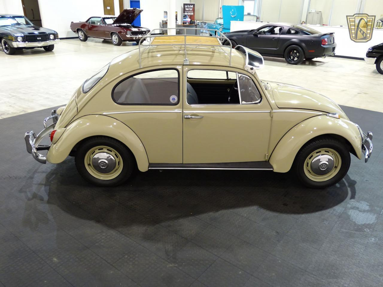 Large Picture of '66 Beetle - MACA