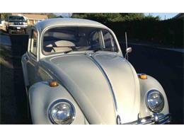 Picture of Classic '66 Beetle - $10,900.00 Offered by a Private Seller - NG5F