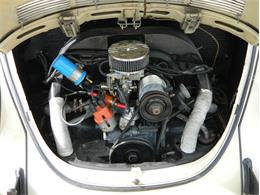 Picture of '71 Beetle - NMBR