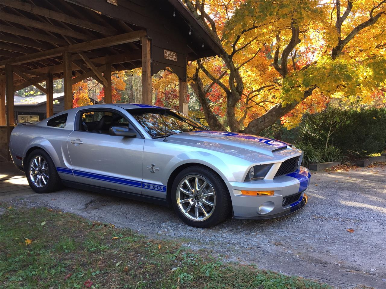 Large Picture of '09 GT500 - NNJM