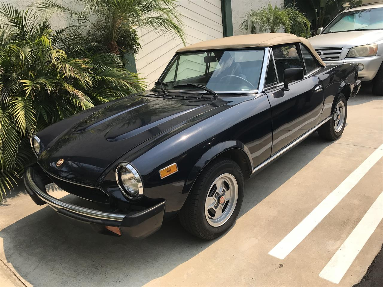 Picture of '81 Spider - NPLU