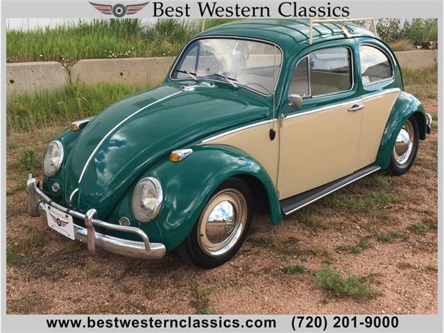 Picture of '64 Beetle - NRFO