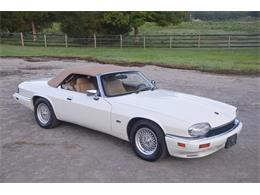 Picture of 1994 XJS - NRL8