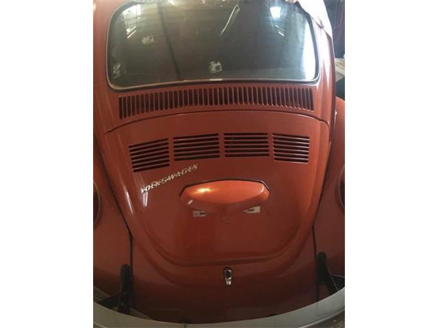 Picture of '73 Super Beetle - NURZ