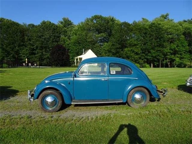 Picture of '63 Beetle - O135