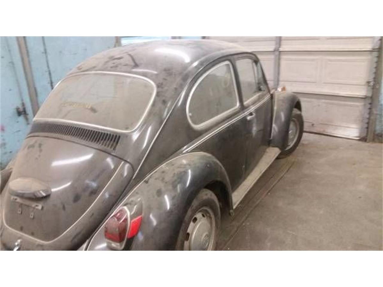 Large Picture of '69 Beetle - O294