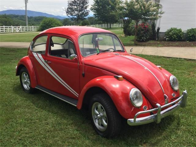 Picture of '66 Beetle - O0F3