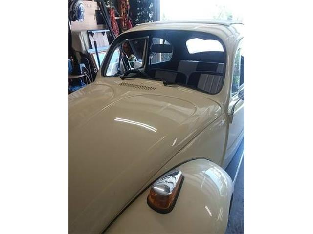 Picture of '71 Beetle - O40G