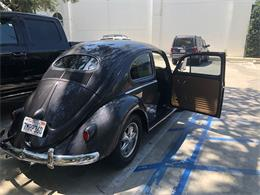Picture of '56 Beetle - O83H