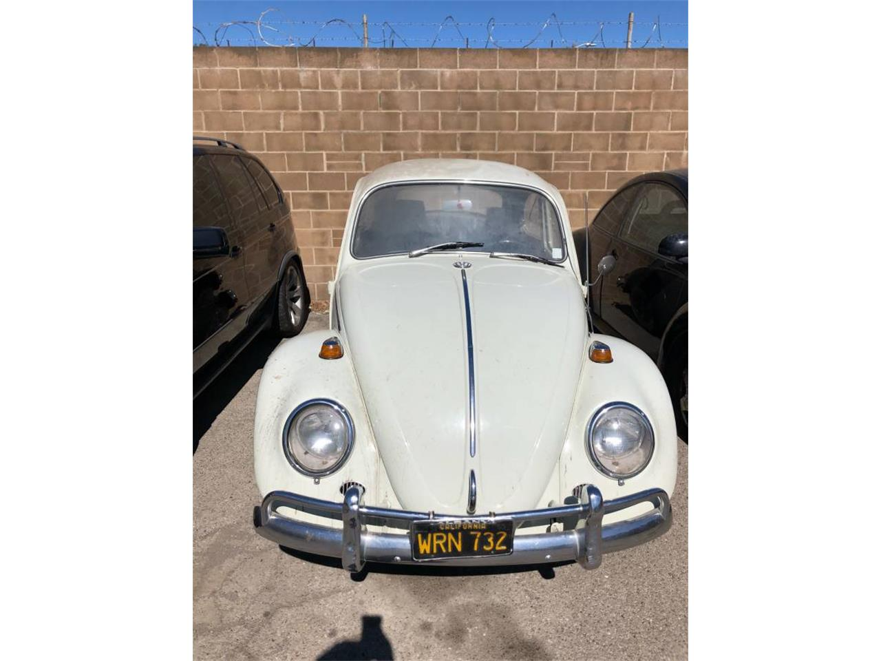 Large Picture of '66 Beetle - OAJG