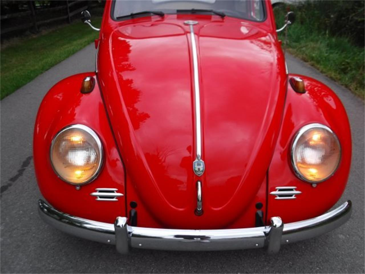 Large Picture of Classic '59 Beetle - OIZB