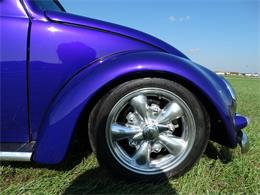 Picture of '56 Beetle - OOT8