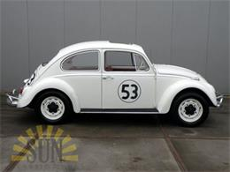 Picture of '66 Beetle - OOYC