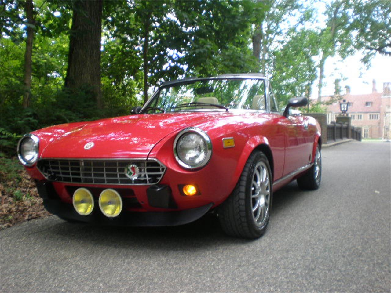 Large Picture Of 81 Spider Ooyi