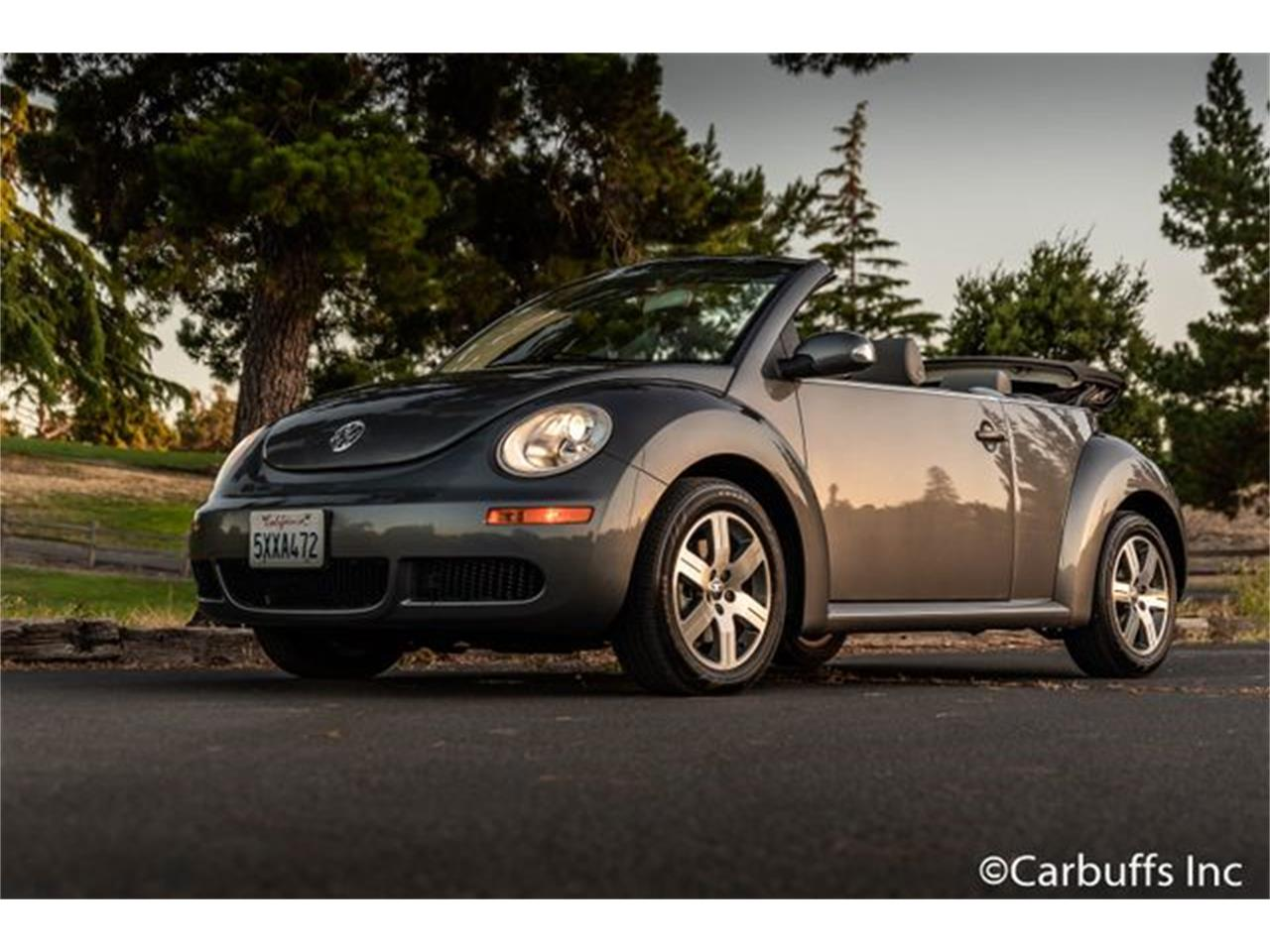 Large Picture Of 06 Beetle Owew