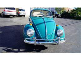 Picture of '65 Beetle - OVOG