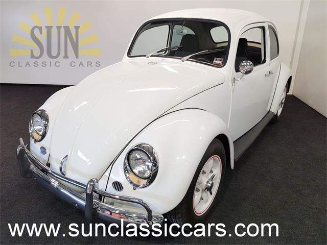 Picture of '66 Beetle - P55F