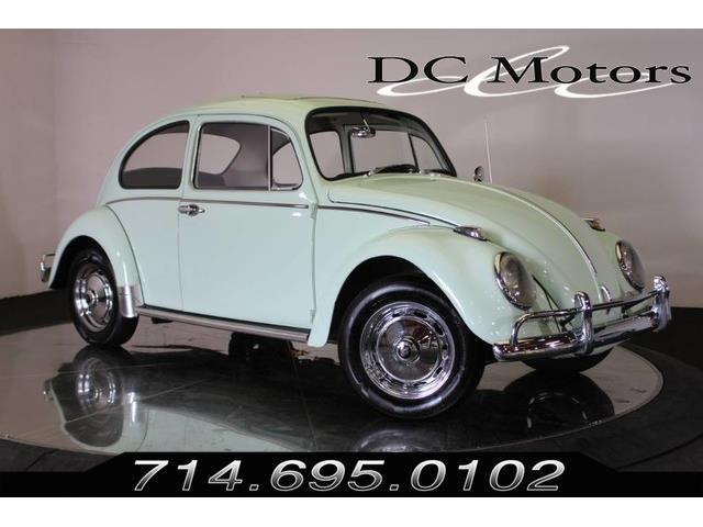 Picture of '66 Beetle - P7Z9