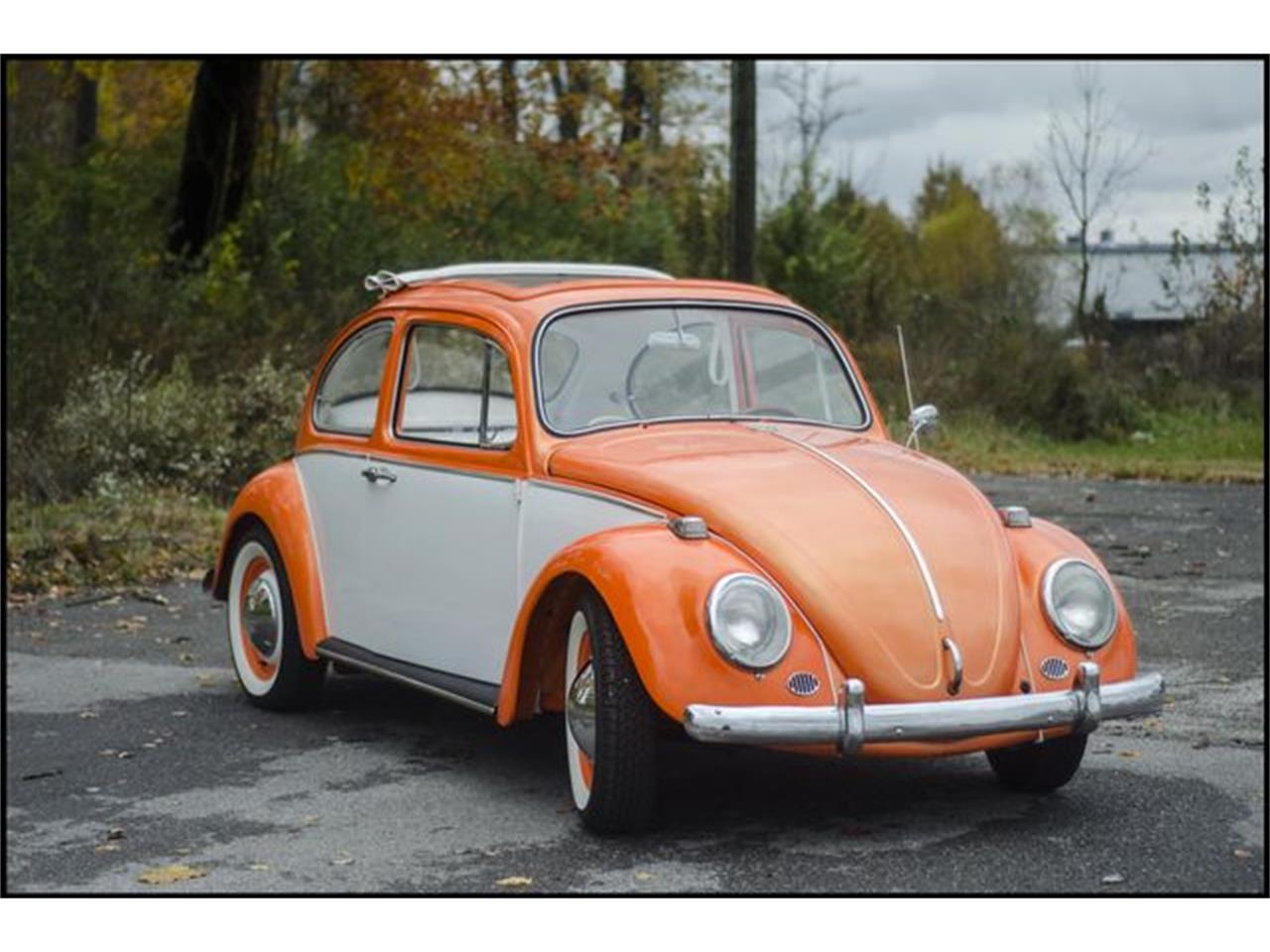 Large Picture of '65 Beetle - PGAV