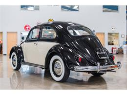 Picture of '61 Beetle - PHI8