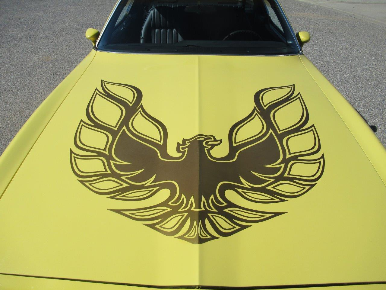 Large Picture of '78 Firebird - PJPG