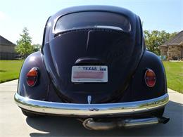 Picture of '64 Beetle - PVPL