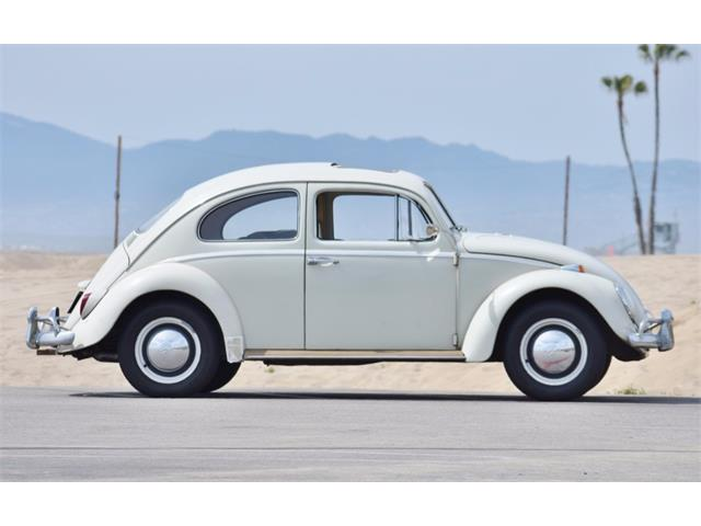 Picture of '64 Beetle - PWW1