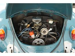 Picture of '66 Beetle - PXSO