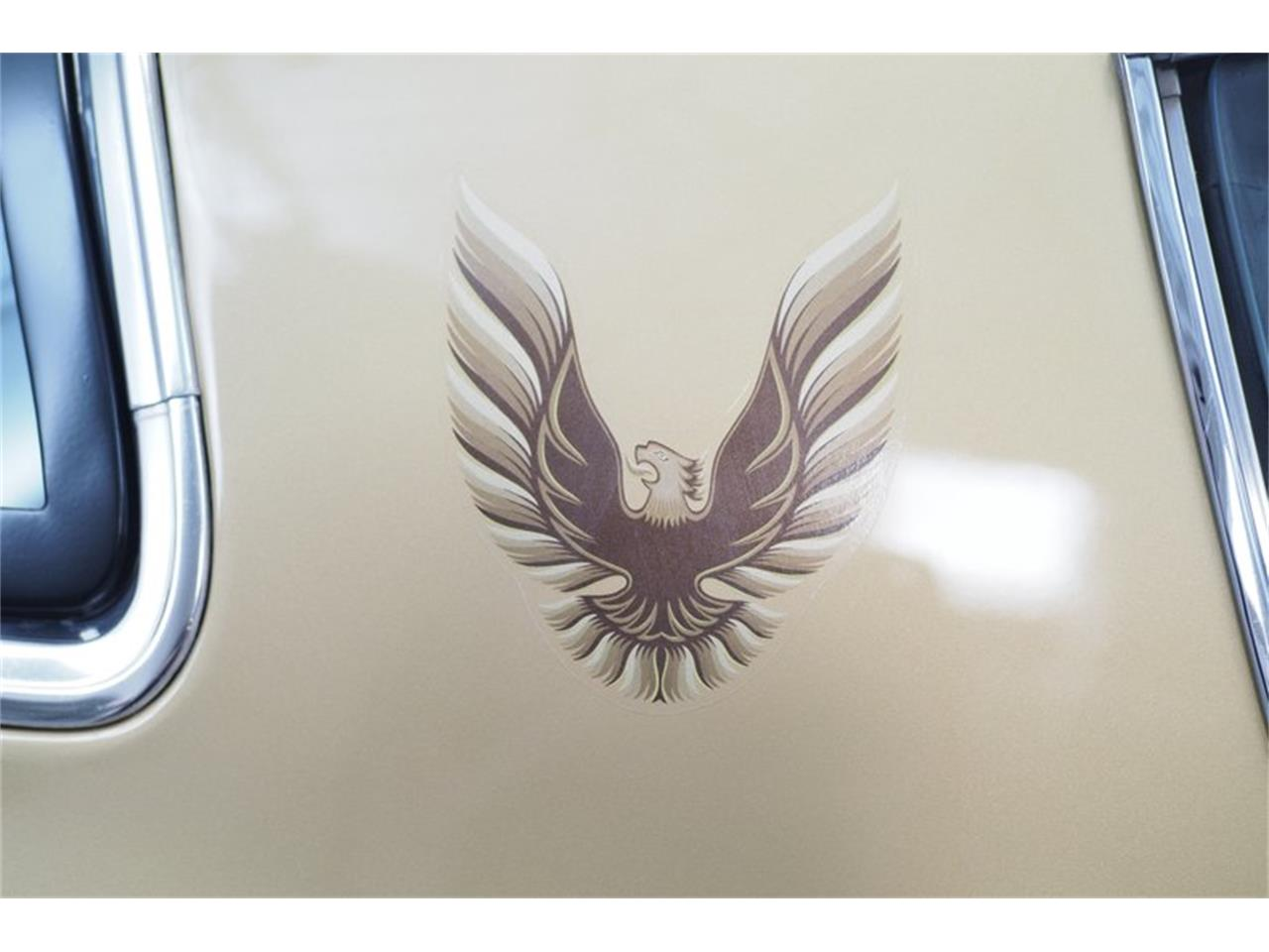 Large Picture of '78 Firebird Trans Am - QANP