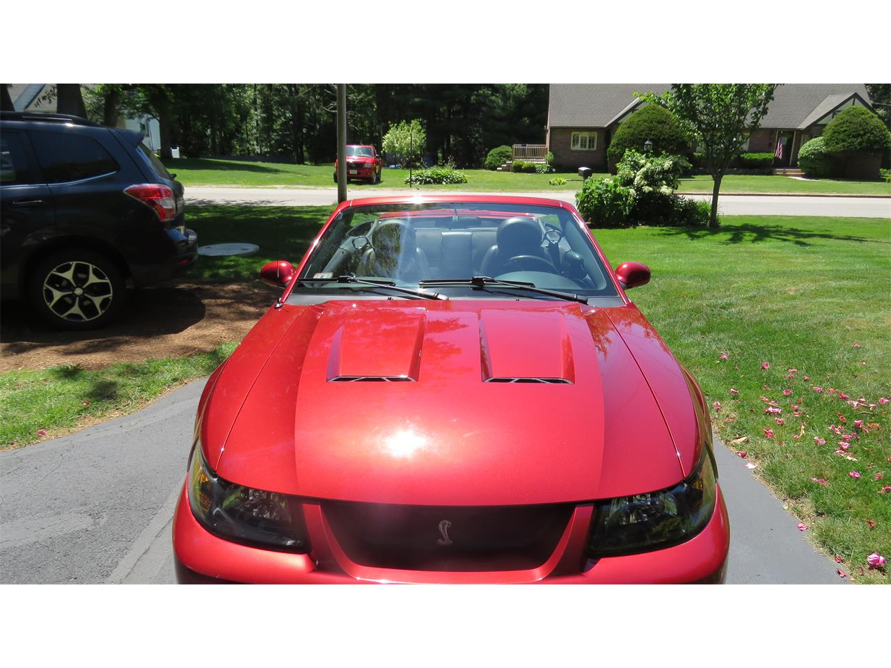 Large Picture of 2004 Ford Mustang SVT Cobra - $23,000.00 - QBSO
