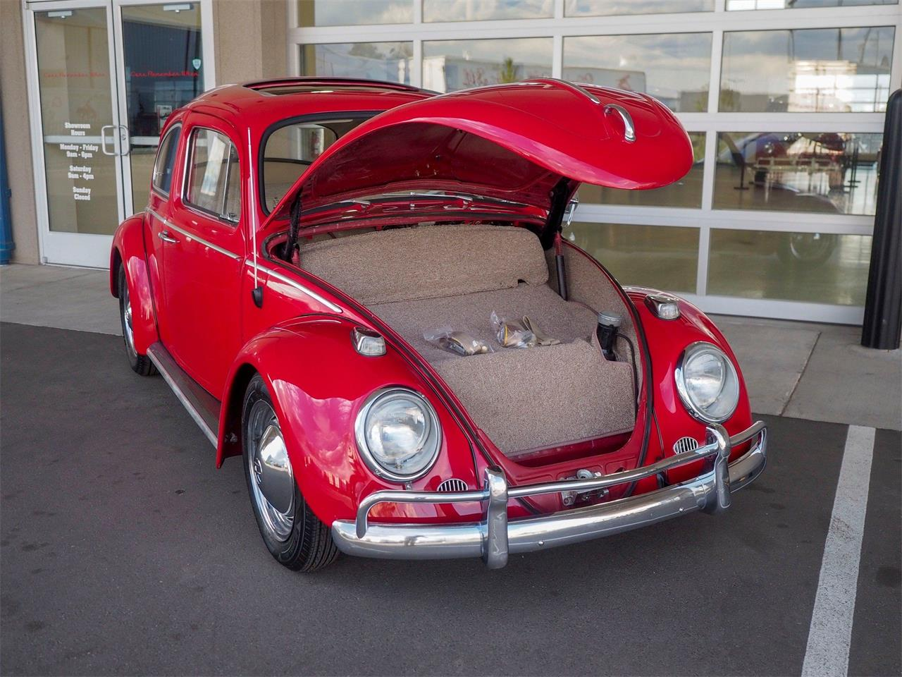 Large Picture of 1964 Beetle - $18,499.00 - QX5G