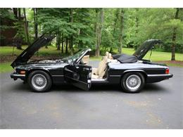 Picture of '91 XJS - R169