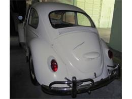 Picture of Classic 1967 Volkswagen Beetle located in Miami Florida Offered by Sobe Classics - D6E2