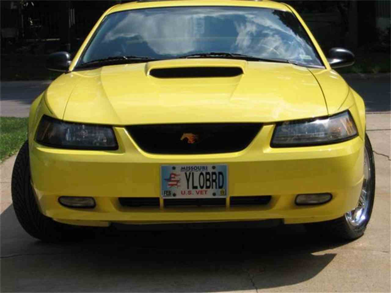 Large Picture of '01 Mustang - EACO