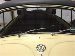 Picture of '67 Beetle - G95P