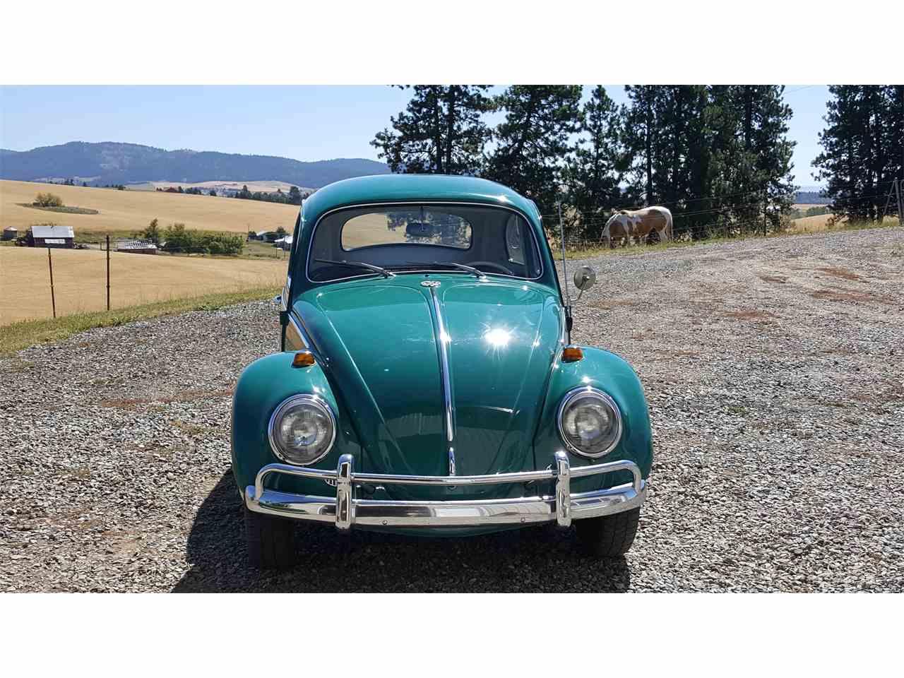 1964 Volkswagen Beetle for Sale | ClassicCars.com | CC-892245