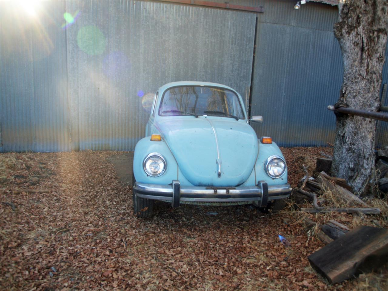 Large Picture of '74 Super Beetle - LBIB