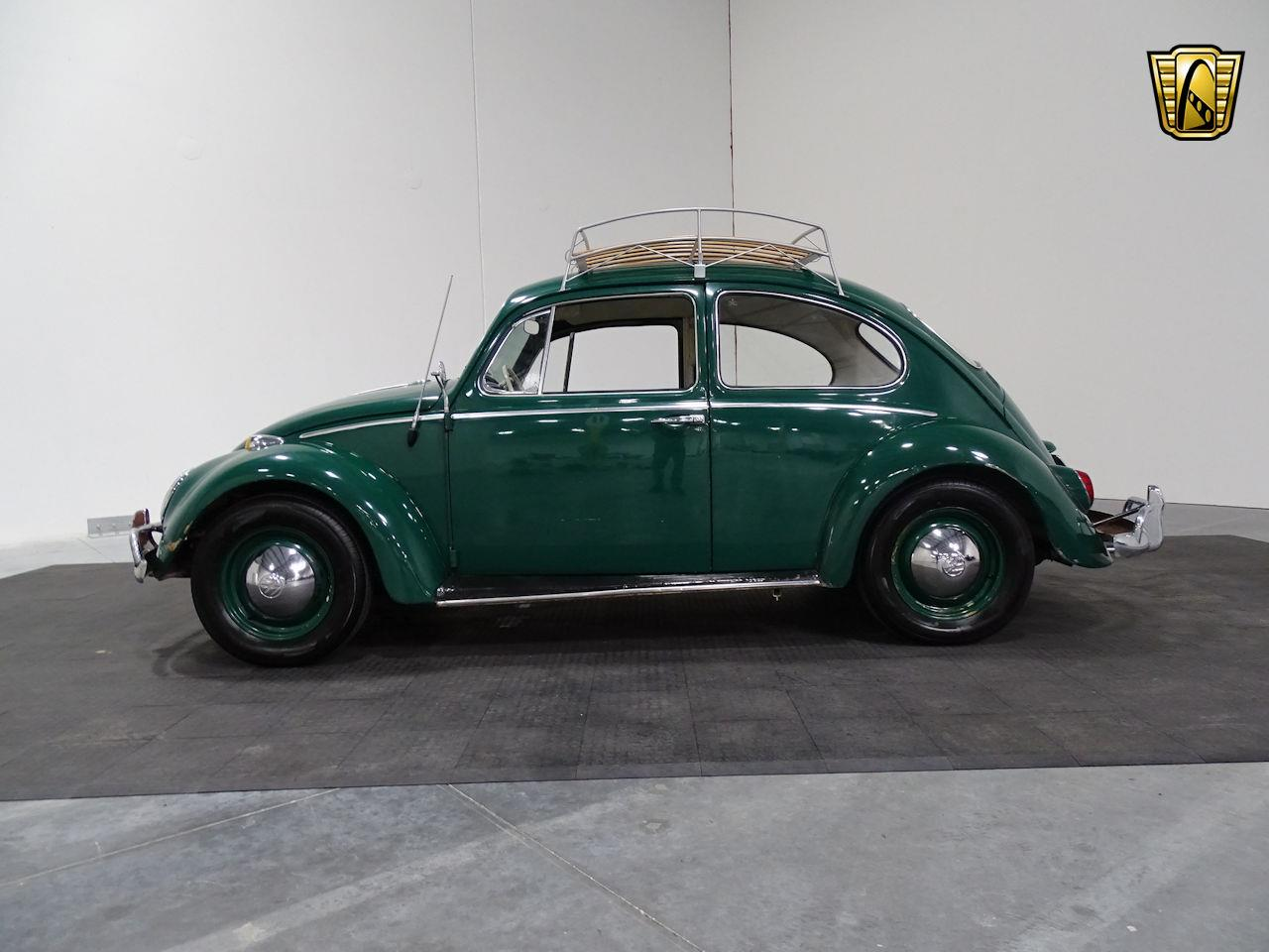 Large Picture Of 65 Beetle Lets